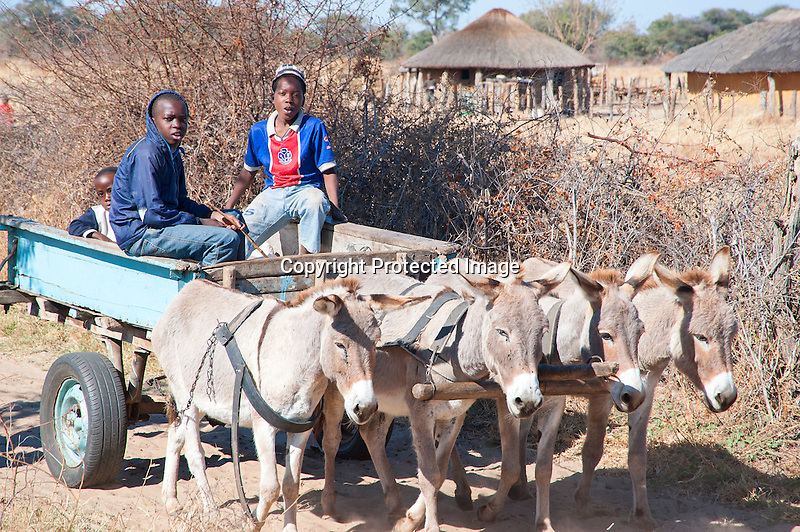 Young Boys Fetching Water with Donkey Cart in Ngamo Village in Zimbabwe
