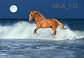 Bob, ANIMALS, collage, horses, photos(GBLA631,#A#) Pferde, caballos