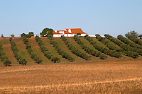 olive grove and farm house alentejo portugal