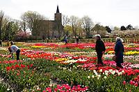 Hortus Bulborum in Limmen.  In de tuin staan meer dan 4000 soorten bloemen. De hortus, waarin voornamelijk tulpen staan, is in 1928 opgericht.