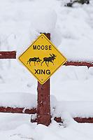 "snowy ""Moose Crossing"" during blizzard in Rimini"