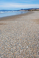 Beach, near Timaru, on east coast between Timaru &  Dunedin, South Island, New Zealand, 201004024961...Copyright Image from Victor Patterson, 54 Dorchester Park, Belfast, United Kingdom, UK. Tel: +44 28 90661296. Email: victorpatterson@me.com; Back-up: victorpatterson@gmail.com..For my Terms and Conditions of Use go to www.victorpatterson.com and click on the appropriate tab.