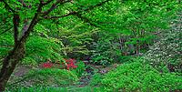View in spring of Yao Japanese Garden, part of Bellevue Botanical Garden, Bellevue, Washington