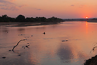 africa, Zambia, South Luangwa National Park,  hippo at sunset