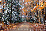 First snow in Clear Creek State Forest, Pennsylvania