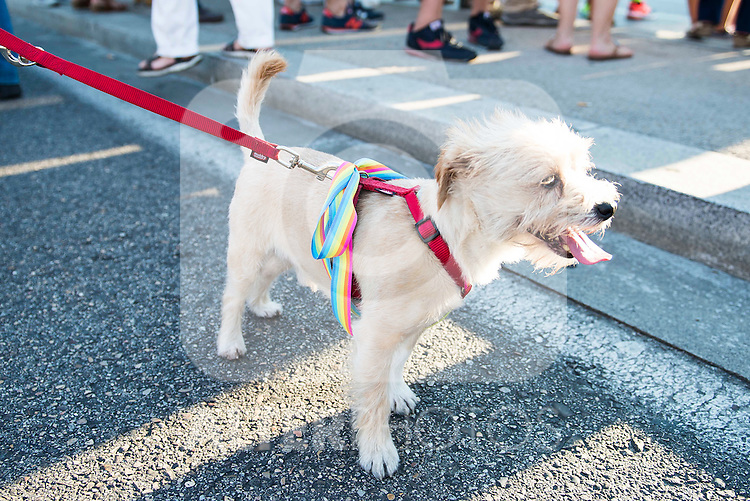 A dog with the Gay Pride flah during the protest Madrid Pride 2016. July 02. 2016. (ALTERPHOTOS/Borja B.Hojas)