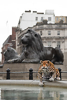 World&rsquo;s first animatronic leopard to joins the  Trafalgar Square Lions to launch Big Cat Week 2017, London.<br /> <br /> <br /> &copy;Ash Knotek  D3237  08/03/2017