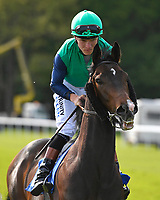 Jack Taylor ridden by Finlay marsh goes down to the start  of The Penang Turf Club Malaysia Handicap (Class 5)   during Afternoon Racing at Salisbury Racecourse on 17th May 2018