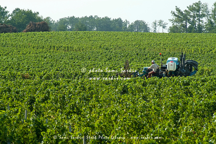 Tractor spraying insecticide on vineyards in Haut-Médoc, Gironde, part of the famous Bordeaux wine region of France.