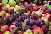 Apple variety on display at a farmers market,