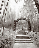 CHINA, Hangzhou, entrance of shine with steps in the bamboo forest, Meijai Wu (B&W)