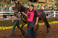 ARCADIA, CA  JANUARY 07: #8 Midnight Bisou in the paddock before the Santa Ynez Stakes (Grade ll) on January 7, 2018, at Santa Anita Park in Arcadia, CA. (Photo by Casey Phillips/ Eclipse Sportswire/ Getty Images)