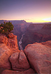 Arizona, Grand Canyon National Park, Toroweap. The Colorado River 3000 feet below the Sandstone rim of the Grand Canyon in pre-dawn twilight.