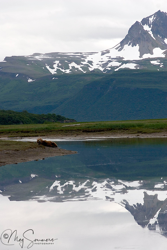 In the Halo Bay area of Katmai National Park there is a mountain known as the Devil's Desk. For perspective in size, look closely at the shore line and you will find a sleepy brown bear (Ursus arctos middendorffi).