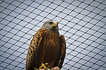 Bird of prey, look