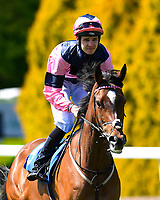 Last Enchantment ridden by Charles Bishop goes down to the start  of The Smith & Williamson British EBF Fillies' Handicap (Class 3)   during Afternoon Racing at Salisbury Racecourse on 17th May 2018