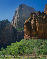 Zion National Park, UT<br /> The Great White Throne towers over the Organ and the green forested banks of the Virgin River in Zion Canyon