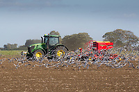 Drilling Winter Wheat in the South Lincolnshire Fens<br /> Picture Tim Scrivener 07850 303986<br /> &hellip;.covering agriculture in the UK&hellip;.
