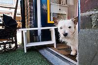 Nederland, Driebergen, 8 maart 2014<br /> Hondje in deuropening<br /> Foto(c): Michiel Wijnbergh