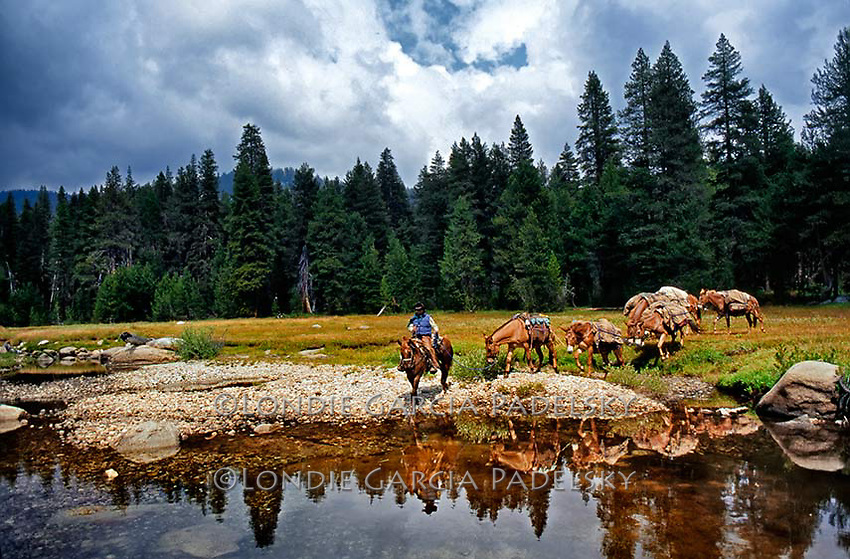 Cowboy leading pack mules across creek near Post Corral Meadows.  On the western slope of the Sierra National Forest, John Muir Wilderness, California<br /> (Roy Garcia)