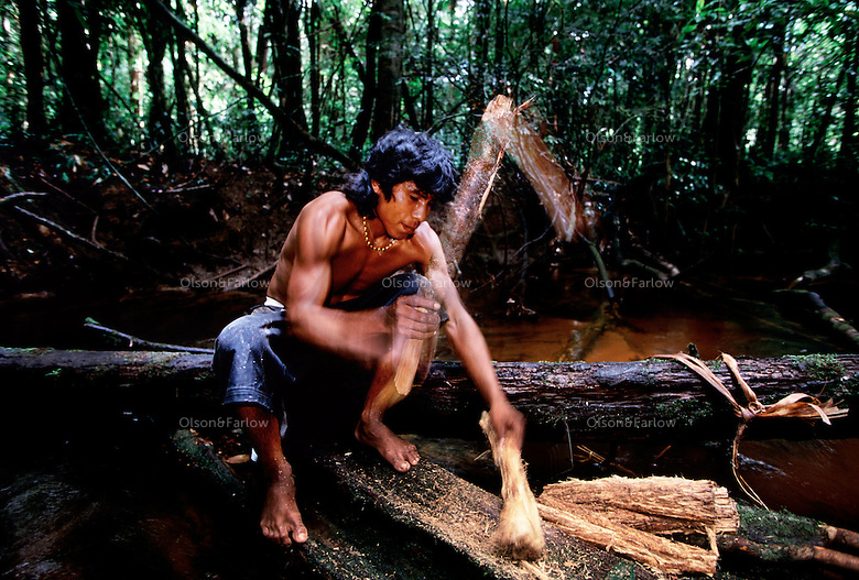 Amerindian Sean Williams beats a Hiari vine into pulp and soaks it in the creek to poison the water and stun the fish so they wash into the nets of the Amerindians waiting at the end of the creek.