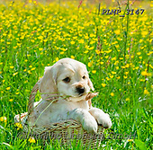 Marek, ANIMALS, REALISTISCHE TIERE, ANIMALES REALISTICOS, dogs, photos+++++,PLMP3147,#a#, EVERYDAY