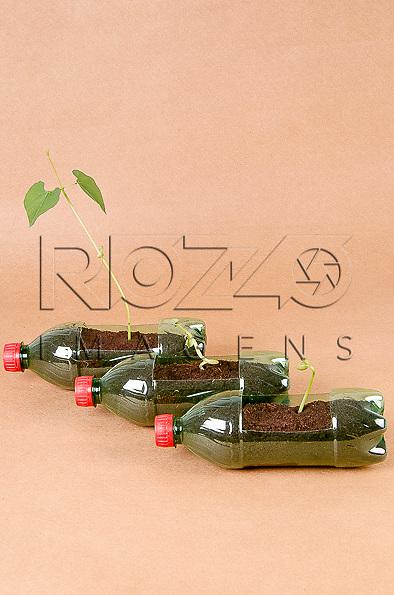 Mudas de diversos tamanhos de feijoeiros plantados na terra em vaso feito de garrafa PET, São Paulo-SP, 12/2014.