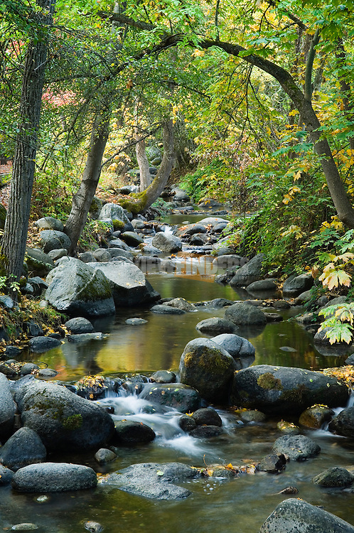 Ashland Creek flows through Lithia Park in Ashland, Oregon..#0510396
