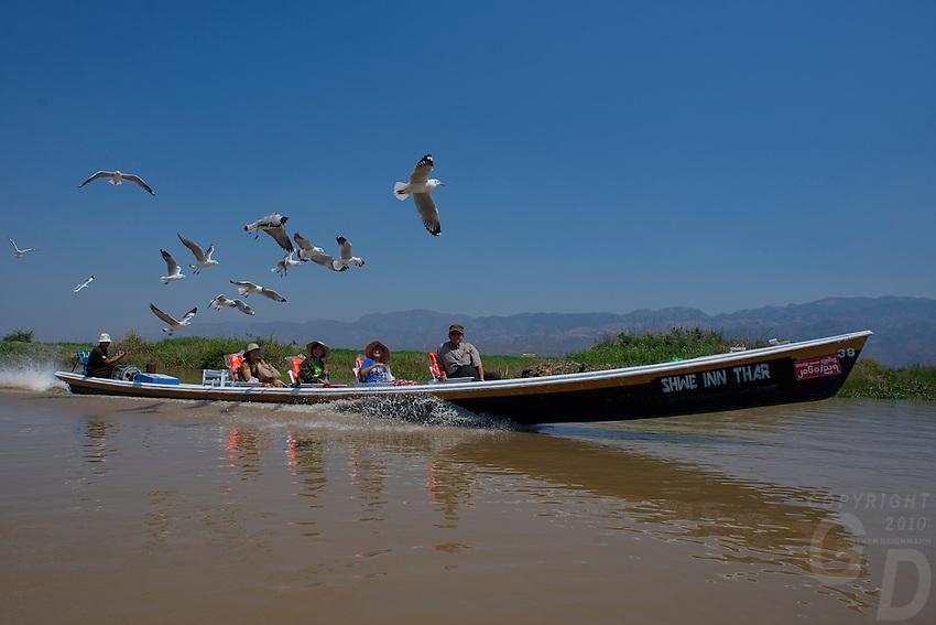 Tourist in a long boat getting followed by a flog of Birds on Inle lake, Shan State, Myanmar/Burma