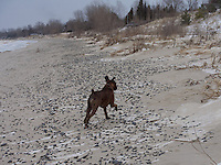 Lake Huron shoreline at Kettle Point, snow, ice and sand with Pork Chops