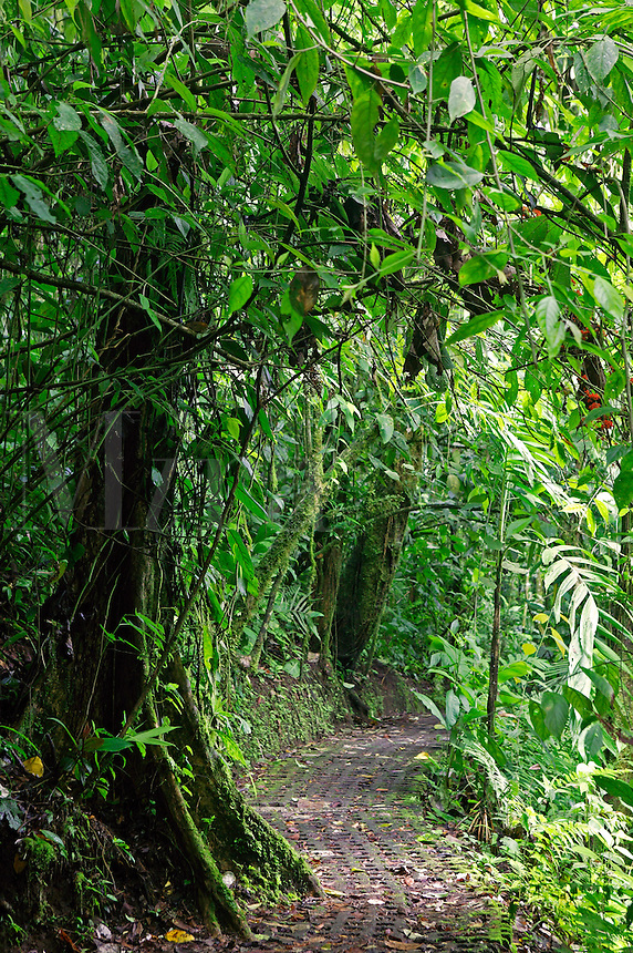 Arenal Hanging Bridges Trail, Arenal, Costa Rica