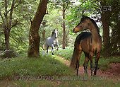 Bob, ANIMALS, collage, horses, photos(GBLA754,#A#) Pferde, caballos