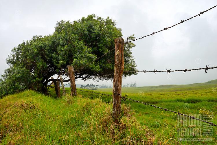 A green field with a barbed wire fence defines a farm's property line along Mud Lane near Mana Road in Waimea, Big Island.