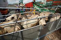"""O navio ABOU KARIM de bandeira libanesa,  e tripulaÁ""""o sÌria, carrega 2500 cabeÁas de gado da exportadora AgroExport com destino a Venezuela, De acordo com dados da CDP-Cia Docas do Par·, de janeiro a setembro deste ano j· foram embarcadas no porto de Vila do Conde cerca de 520.000 mil cabeÁas de gado para diversos paÌses no oriente mÈdio e amÈrica do sul ,  por grandes exportadoras/produtoras de gado como a Merc˙rio, Minerva e KaiapÛs entre outras.Foto Paulo SantosPorto de Vila do  Conde, Barcarena, Par·, Brasil.09/10/2013"""