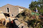 Bauer in Vrh. Farmer in Vrh. Krk Island, Dalmatia, Croatia. Insel Krk, Dalmatien, Kroatien. Krk is a Croatian island in the northern Adriatic Sea, located near Rijeka in the Bay of Kvarner and part of the Primorje-Gorski Kotar county. Krk ist mit 405,22 qkm nach Cres die zweitgroesste Insel in der Adria. Sie gehoert zu Kroatien und liegt in der Kvarner-Bucht suedoestlich von Rijeka.