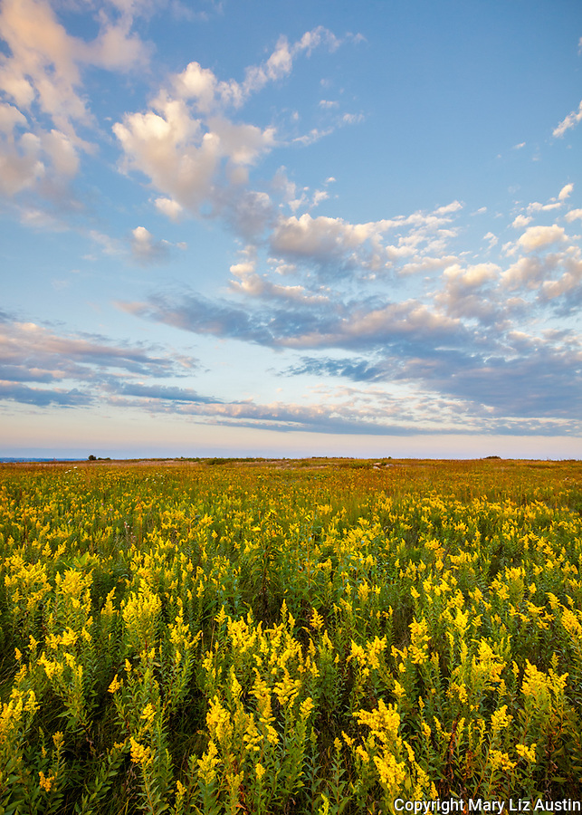 Blue Mound State Park, Minnesota: Field of goldenrod (Solidago speciosa) under a summer sky