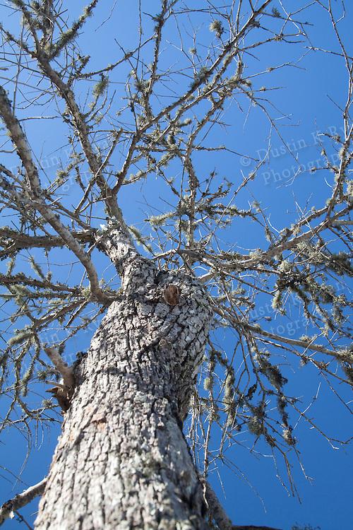Old tree Folly Beach South Carolina blue sky