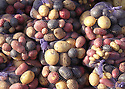 Net bags full of new potatoes in colors of tan, red and purple at the Poulsbo Farmers Market