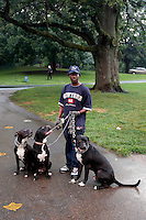 Man with pit bulls in Central Park, NY