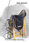Marcello, REALISTIC ANIMALS, REALISTISCHE TIERE, ANIMALES REALISTICOS,saddle,horse, paintings+++++,ITMCEDC1073,#A#