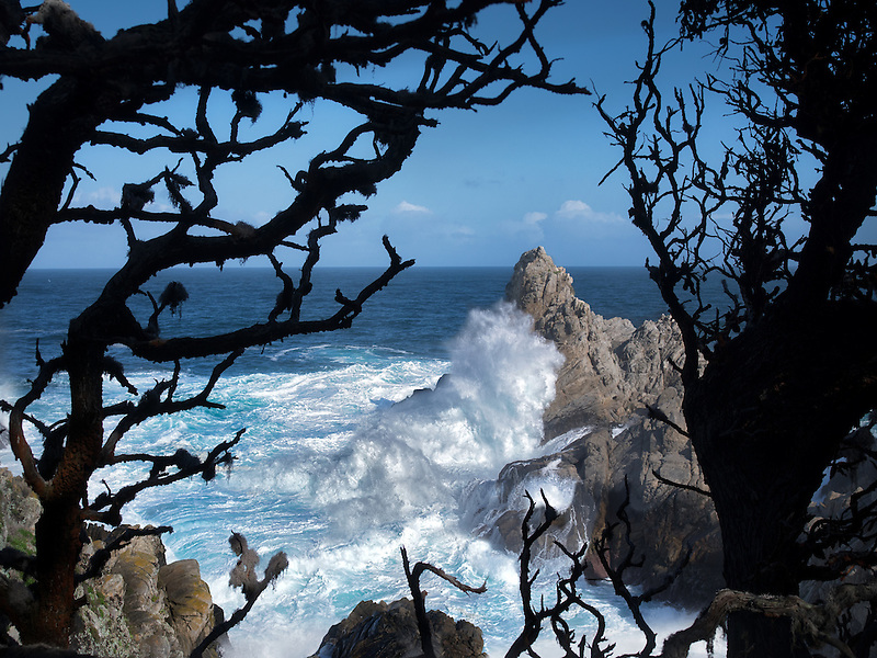 Coastline through branches of trees with waves. Point Lobos State Reserve. California