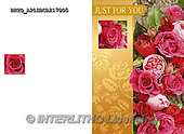 Alfredo, FLOWERS, BLUMEN, FLORES,  photos+++++,BRTOAP12BCA217805,#F#