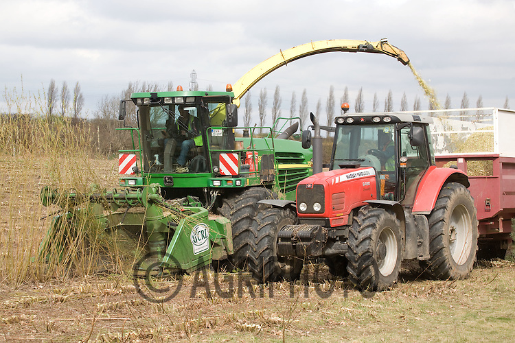 Harvesting Coppice Willow For Biomass For Power Stations In Nottinghamshire