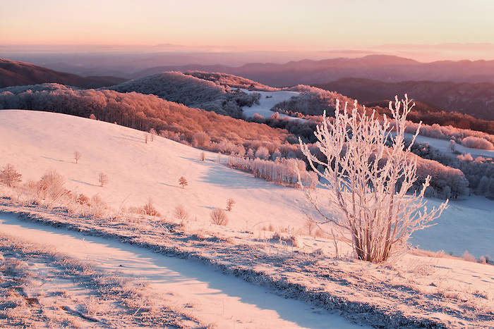 """MAX PATCH WINTER"""