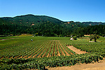 California: Vineyards in Napa Valley..Photo copyright Lee Foster, 510/549-2202, lee@fostertravel.com, www.fostertravel.com..Phooto #: caitin102