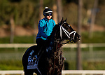 OCT 29: Breeders' Cup Dirt Mile entrant Coal Front, trained by Todd A. Pletcher,  at Santa Anita Park in Arcadia, California on Oct 29, 2019. Evers/Eclipse Sportswire/Breeders' Cup
