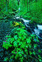 738600036 wahkeenah falls and stream in the columbia river gorge natioinal scenic area in northern oregon