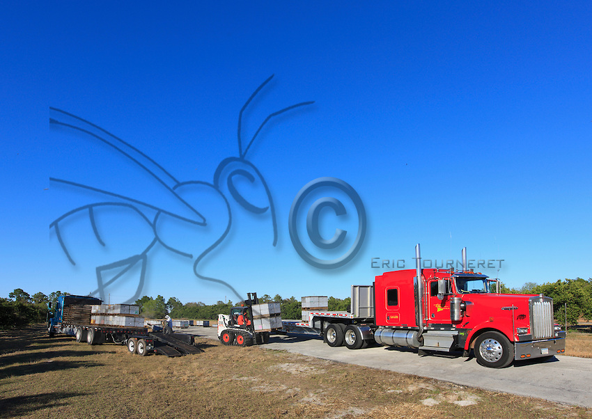 At Dave Hackenberg's apiary near Wanchula, Florida, loading the 444 hives before departure.