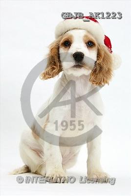 Kim, CHRISTMAS ANIMALS, photos(GBJBAK1223,#XA#) stickers