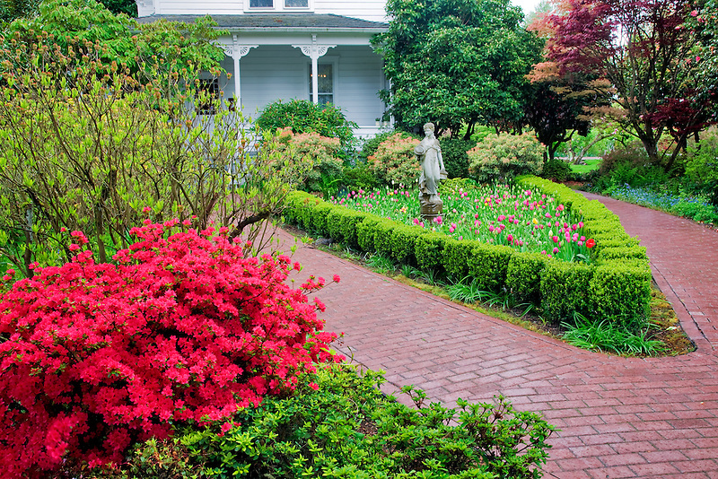 House and gardens. Cherry Blossoms. Hulda Klager Lilac Gardens, Woodland, Washington